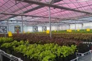"""蔬菜美得像花儿 农民竟用手机""""种""""了78亩地"""